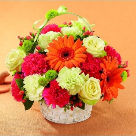 Colorful basket of orange Gerbera daisies