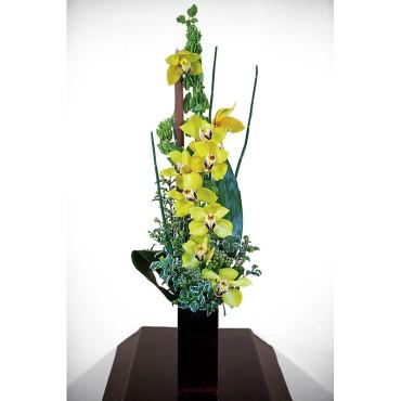 Cymbidium orchid presentation